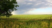 Порядок действий при покупке земельного участка в Ижевске