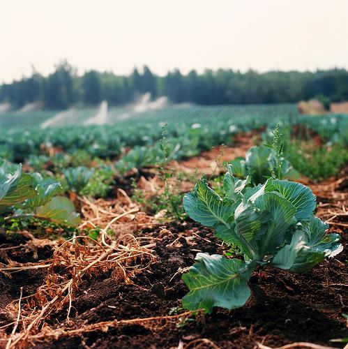 Правила посадки овощных культур на огороде